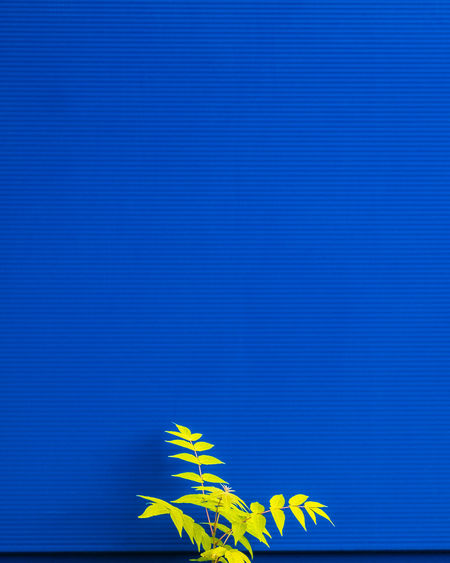 Bluebackground Blue No People Pattern Minimalism Minimalist Photography  Nature Copy Space Leaf Plant Part Plant Growth Beauty In Nature Full Frame Symbol Background Minimalobsession Simplicity.