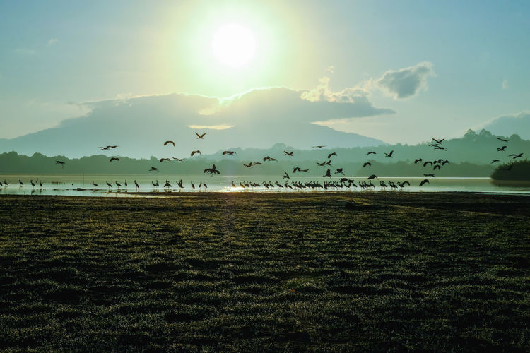 Flock of birds on land against sky