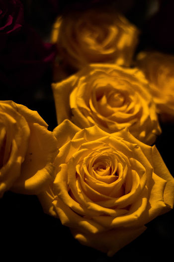 🌹 Yellow Textile Backgrounds Gold Colored Gift Full Frame Close-up Flower Head Bauble Single Flower Petal Pollen Rosé Blooming Ribbon - Sewing Item Single Rose