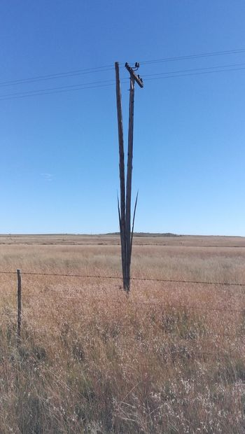 split hairs......in the Karoo we have split poles after the lighting storm. Lighting Landscape Sky Land Environment Nature Field