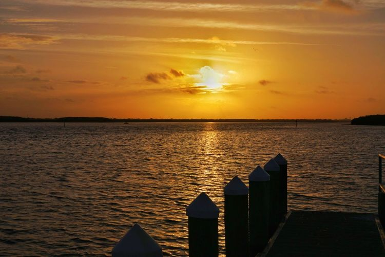 Sunrise Sea Vacations Sun Tourism Travel Water Beach Tampa, Florida Tampa Florida Sunny Silhouette Canon Canonphotography Sigma