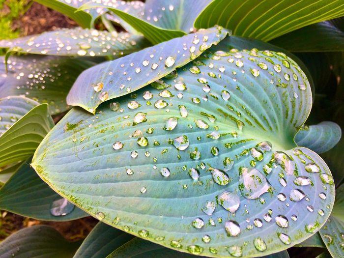 Nature Art Leaf Plant Part Water Plant Growth