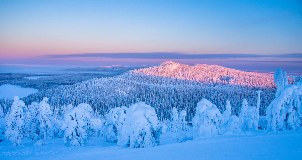 Snowy landscape seen during the polar night when the sun never rise high up on the sky in Ruka, Finland Kuusamo Polar Night Beauty In Nature Blue Cold Temperature Finland Landscape Landscape_photography Nature Outdoors Ruka Snow Tranquil Scene Winter Lapland Lost In The Landscape Perspectives On Nature Scenics Tranquility No People Sunset Day Tree