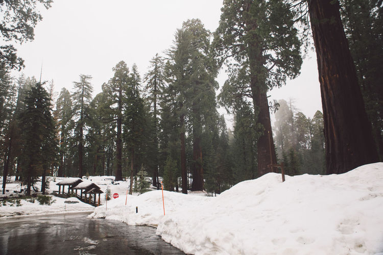 Beauty In Nature Cold Temperature Day Forest Growth Landscape Mountain Nature No People Outdoors Road Road Trip Scenics Sequoia Sequoia National Park Sky Snow Snowing Tranquil Scene Tranquility Tree Tree Trees Weather Winter