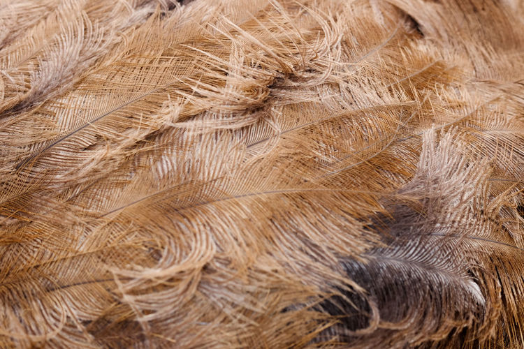 Beige Feathers