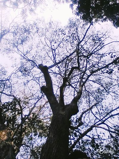 Tree Branch Low Angle View Nature Sky Beauty In Nature Bird Growth Tree Trunk Outdoors Animal Themes No People Bare Tree Day Perching