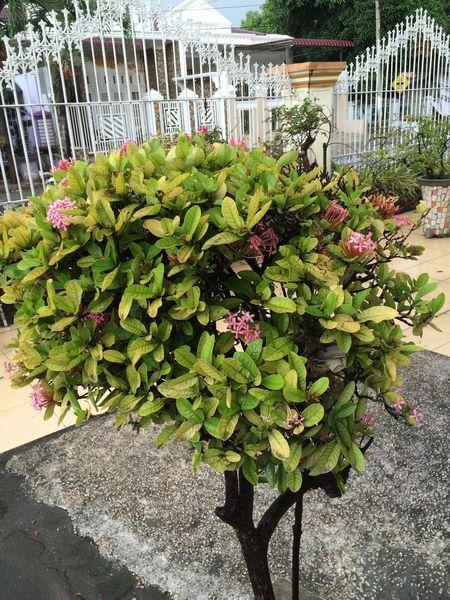 Flower Bunga Medan Sumut Rumah
