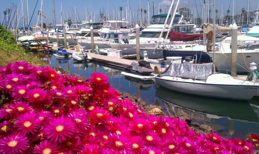 Winter Is Over Colors Boats Flowers Spring
