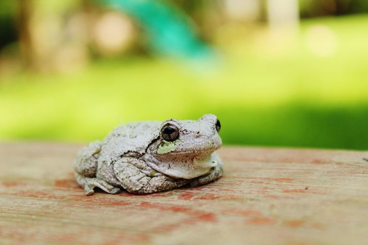 Close-up of toad
