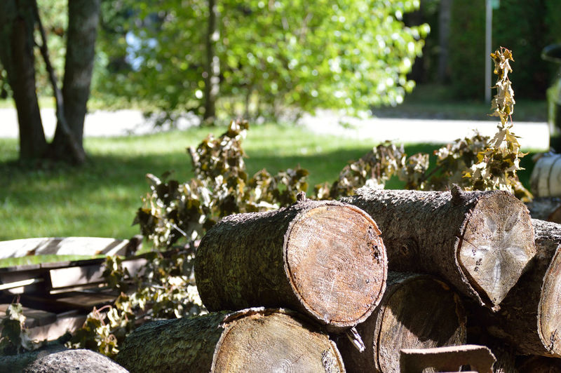 Close-up Day Deforestation Deterioration Field Firewood Focus On Foreground Growth Landscape Log Lumber Industry Nature No People Old Outdoors Run-down Selective Focus Sky Stack Tranquil Scene Tranquility Tree Tree Trunk Wood - Material Wooden