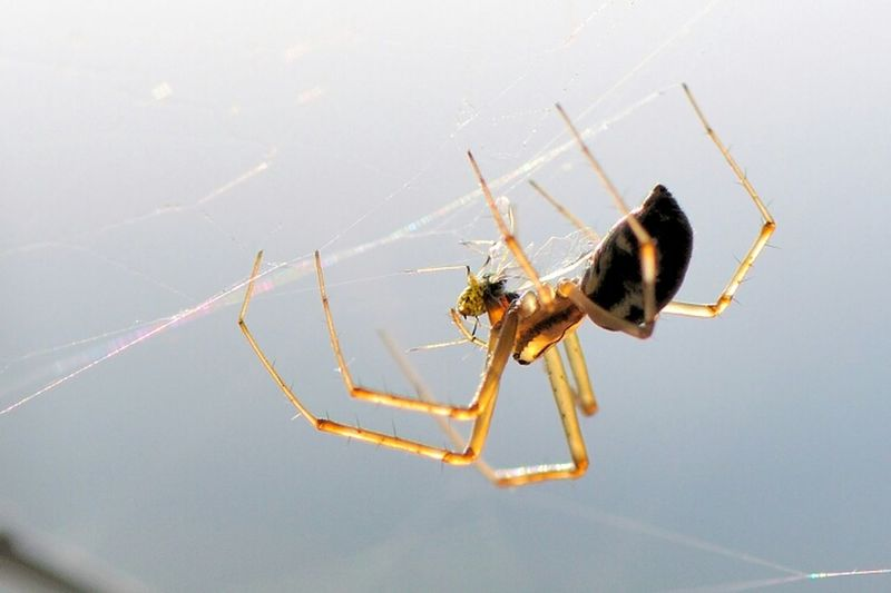 Lucky Hunter Animals Spider Macro Insects  Macro Photography Nature_collection