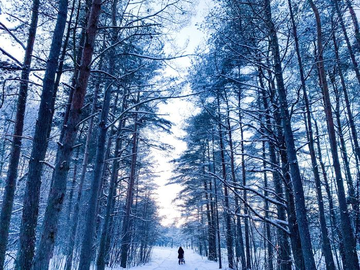 In the middle of the snowy forest. Weather Condition Mothernature Beauty In Nature Photography Nature_collection Weather Woods Pine Tree Naturelovers Travel Nature Photography Estonia Low Angle View Tree Plant Nature Day Sky Growth Forest Beauty In Nature Tranquility Branch Backgrounds Winter Trunk Bare Tree Outdoors Land Tall - High