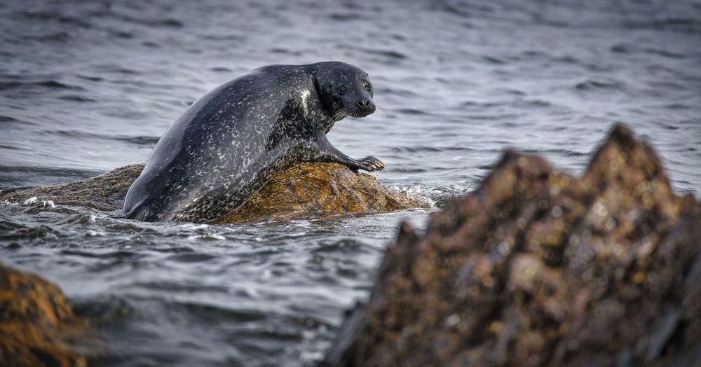 Seal on rock in sea
