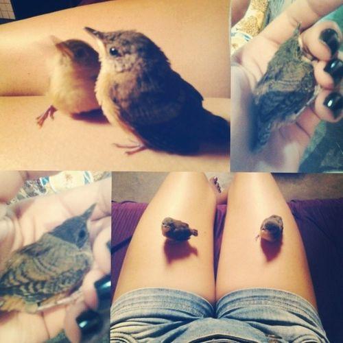 Love birds ♡ Cute Love Like L4l f4f tagsforlikes follow4follow like4like follow .