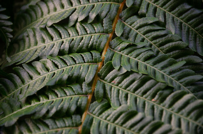 Full frame shot of succulent plant leaves