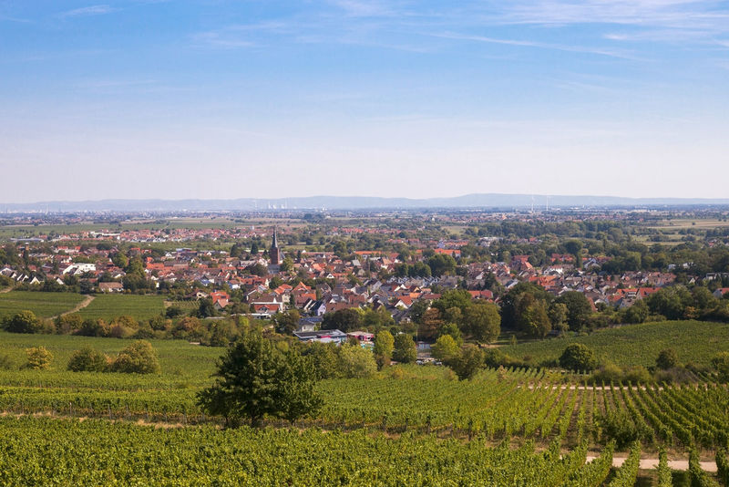 Deidesheim with vineyard Agriculture Architecture Beauty In Nature Building Building Exterior Cityscape Crop  Day Deidesheim Environment Farm Field Growth Landscape Nature No People Outdoors Palatinate Residential District Rural Scene Scenics - Nature Sky Tree Weinstraße Winemaking