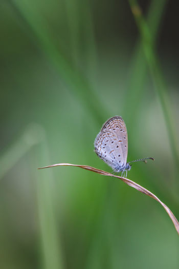 Animal Themes Animals In The Wild Beauty In Nature Animal Wildlife Close-up Plant Invertebrate Animal Animal Wing Insect Focus On Foreground One Animal Nature Day No People Butterfly - Insect Outdoors Butterfly