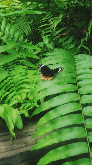 Butterfly ❤ Butterfly Garden Butterfly Wonderland Taking Photos Check This Out