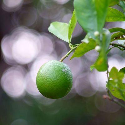 понедельник - это тот же лимон , только ещё кислее( всех с началом предпразничной недели(( Природа фотография фотонастроение Боке красиво точтоялюблю Monday Lime Nature Photo Photomood Beautiful Ilike it