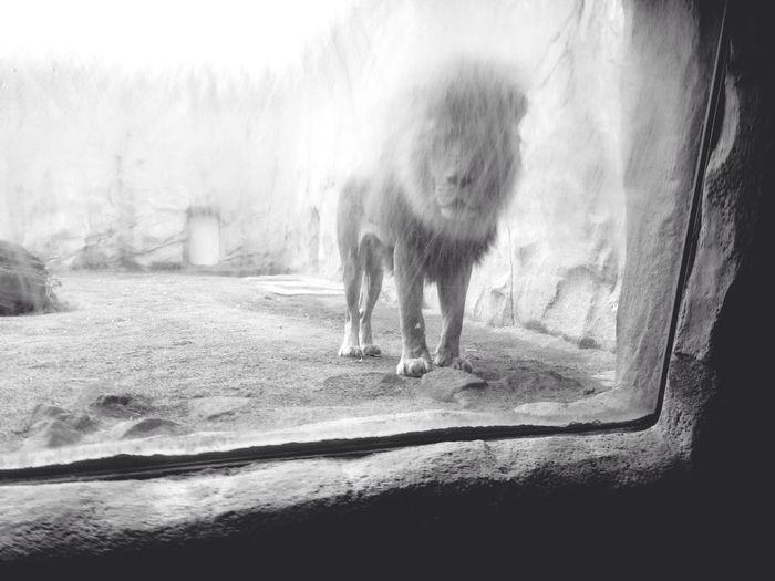 Don Filter Monochrome Blackandwhite Animals