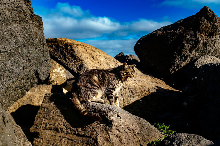 Cat relaxing on rock against cloudy sky