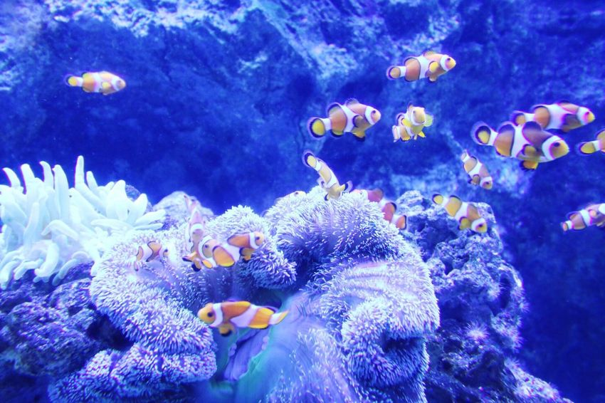Underwater Sea Life Blue Water UnderSea Animal Themes Swimming Animals In The Wild No People Aquarium Photography Fish Fishes Animal In Water