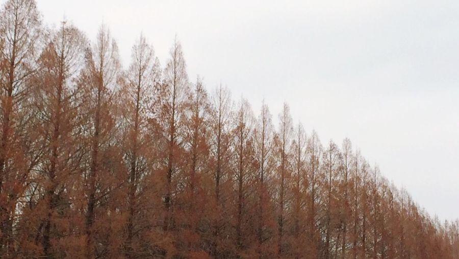 冬 自然 Nature 公園 Park Winter
