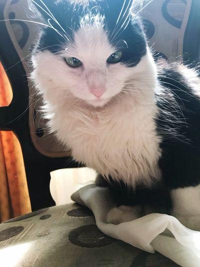 #mimi #cat #baby #bad #beatiful
