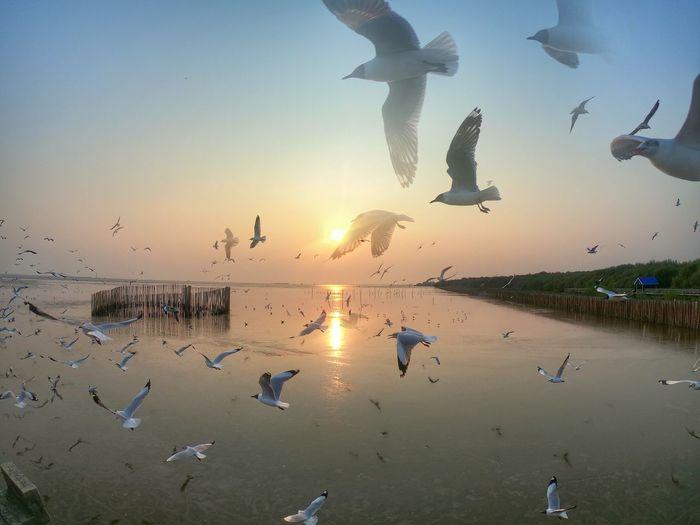 bird Bird Flamingo Flying Water Sunset Swimming Flock Of Birds Reflection Blue Sky