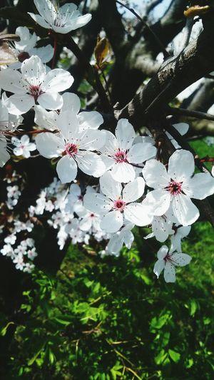 Beautiful flowers ❤😍
