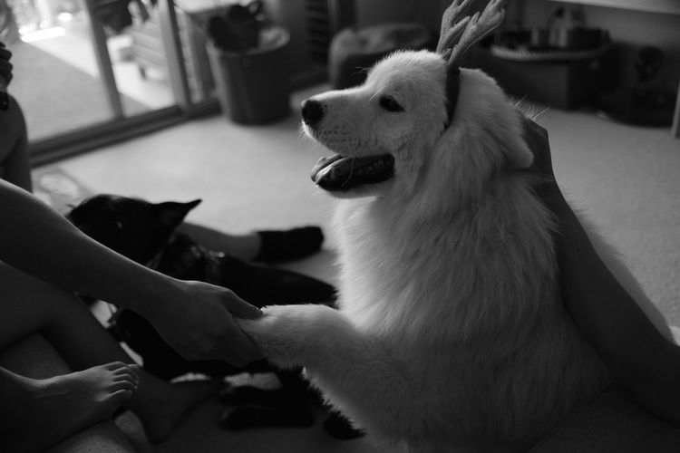 Lieblingsteil Animal Themes One Animal Mammal Animal Wildlife Indoors  Domestic Animals Animals In The Wild Close-up Pets No People Day Yawning Human Hand Fujifilm_xseries Fujifilm Monochrome Monochrome Photography Blackandwhite Black And White Black & White Black&white