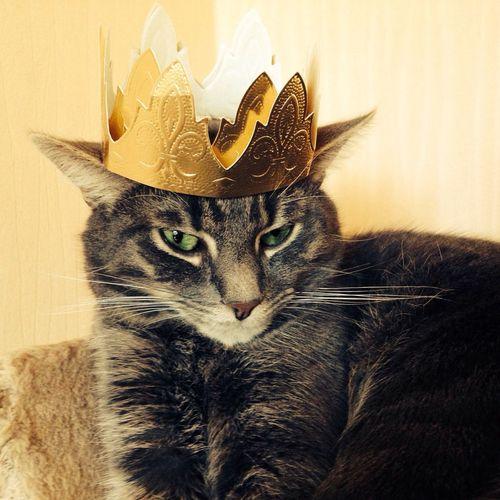 Marley le rois ❤️ Cat