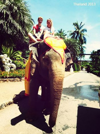 Elefant :) My Brother & I Thailand 2013 Cool