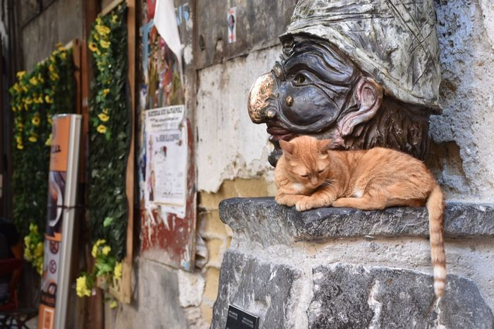 Architecture Outdoors Building Exterior Built Structure No People Day Animal Themes Domestic Cat Mammal Lion - Feline Statue Feline Domestic Animals Gargoyle