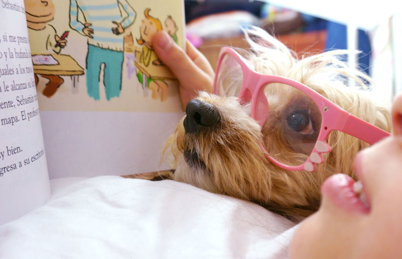 Book Cool Dog Cooldog Dog Dog Reading Domestic Animals Glasses Pets Read Reader Relaxing Story Storyteller Storytelling Studying