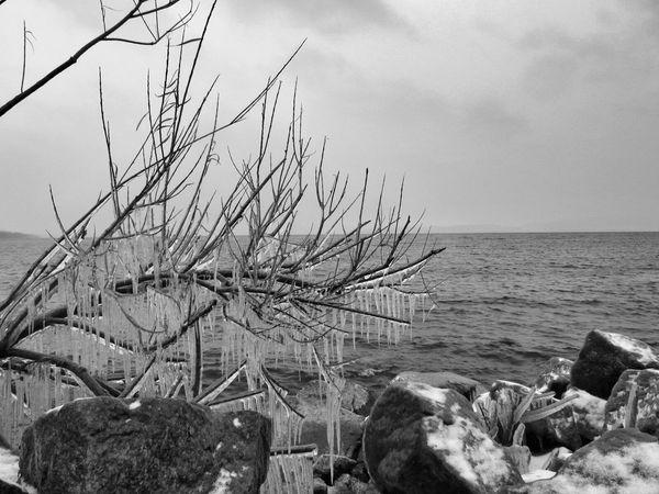 Low Angle Icicles Lake Shore Blackandwhite