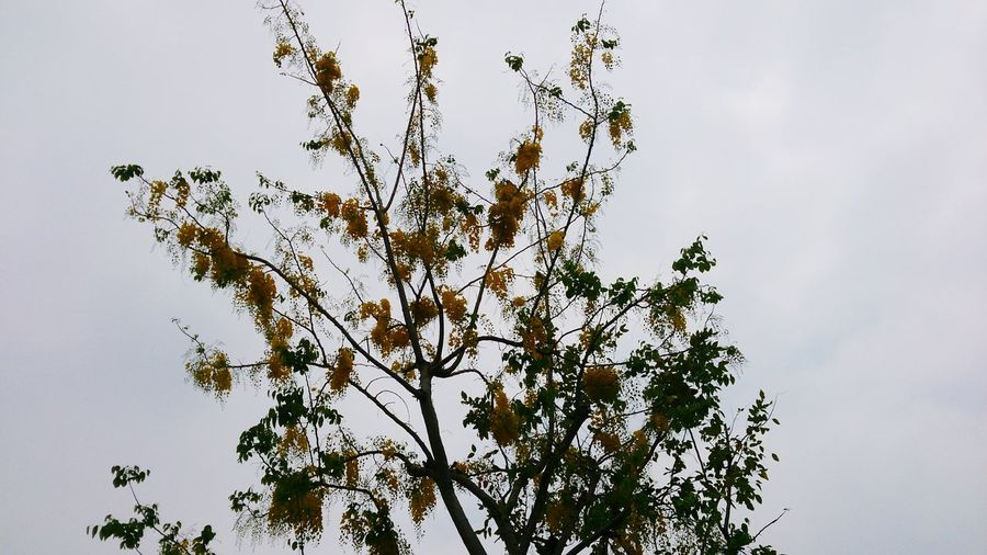 Bird Tree Branch Bird Of Prey Flying Leaf Flock Of Birds Plant Part Sky Animal Themes