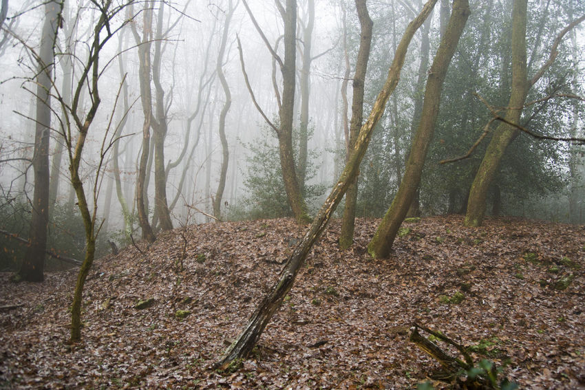 Bäume Und Himmel Day Fog Forest Landscape Laubwald Leaves Nature Nebel No People Outdoors Scenics Tree Area Wald
