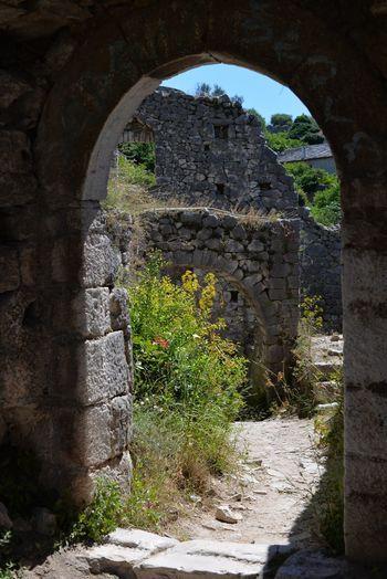 Plants seen through archway