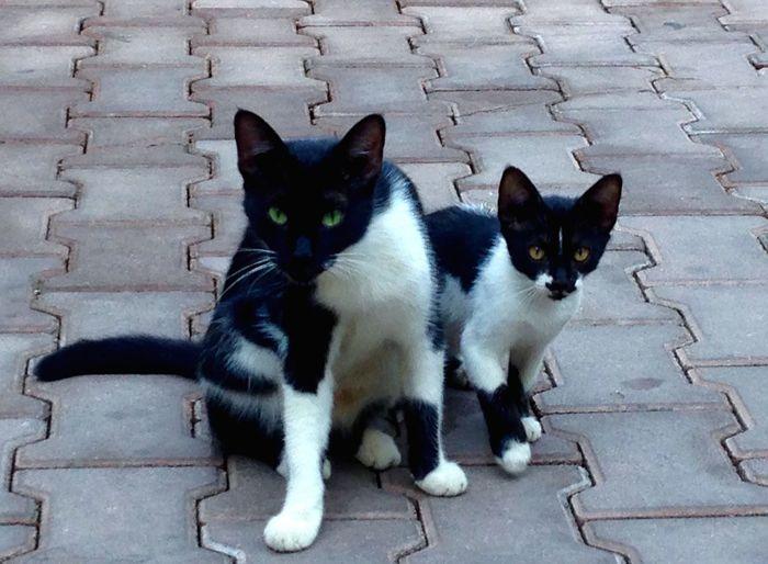 Cat Homeless Cats