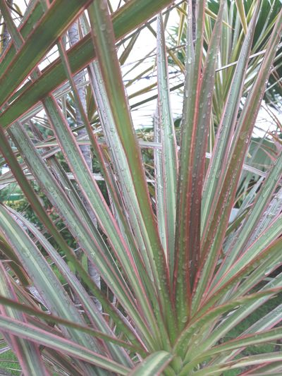 Growth Plant No