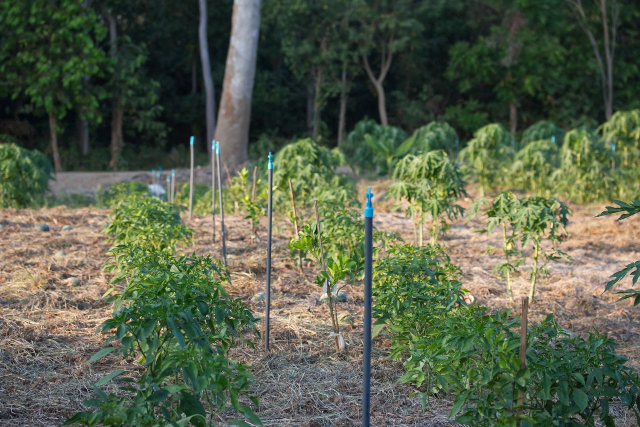 PLANTS GROWING IN FIELD