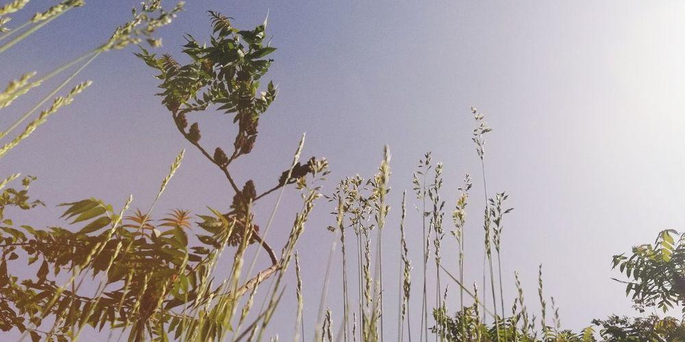 困龙 Tree Flower Sky Close-up Plant