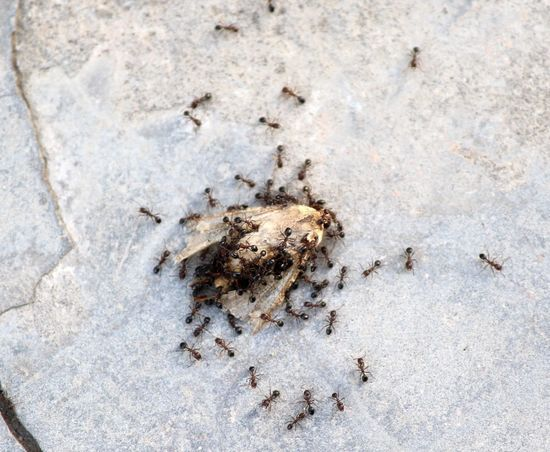 Ants Ants At Work Ants Feasting Ants Kill Ants Life Ants On The Go! Antsphotography Death Moth Dead