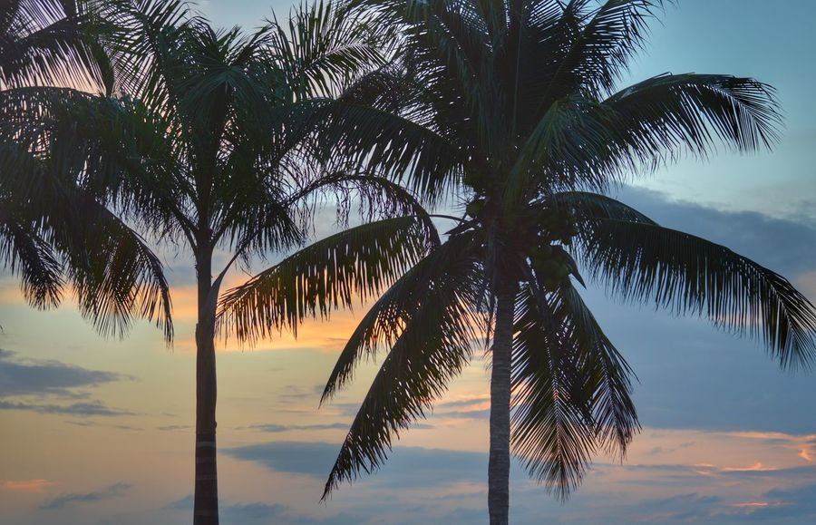 Cloud - Sky Trees Palm Trees Clouds And Sky Sunset Coconut Trees Silhouette Outdoors Florida Beauty In Nature Vacation Sky Travel Majestic United States Cloud Tranquility Nature Tropical Climate Tropical Paradise Tree Trunk Bokeelia