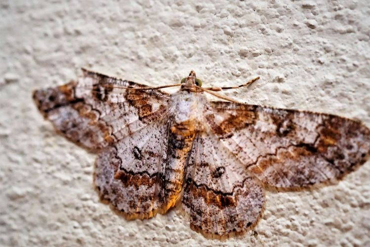 Moth on the