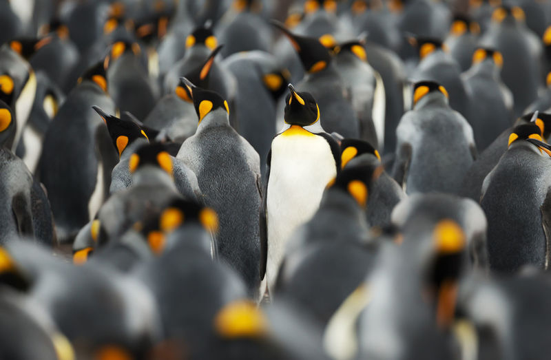 Full frame shot of penguins