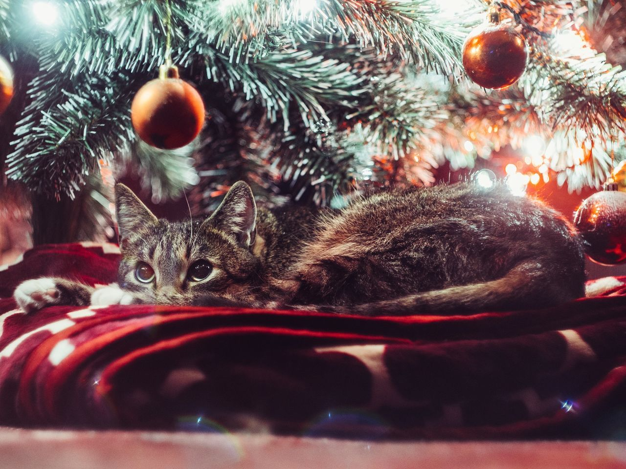 Close-up of cat resting by christmas tree
