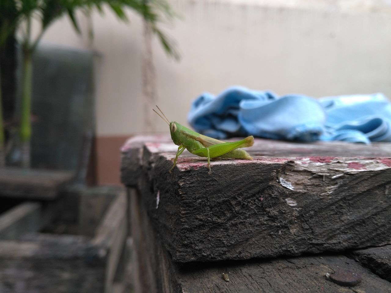 animals in the wild, one animal, animal wildlife, animal themes, day, focus on foreground, no people, close-up, outdoors, tree trunk, nature, green color, retaining wall, perching, tree, reptile