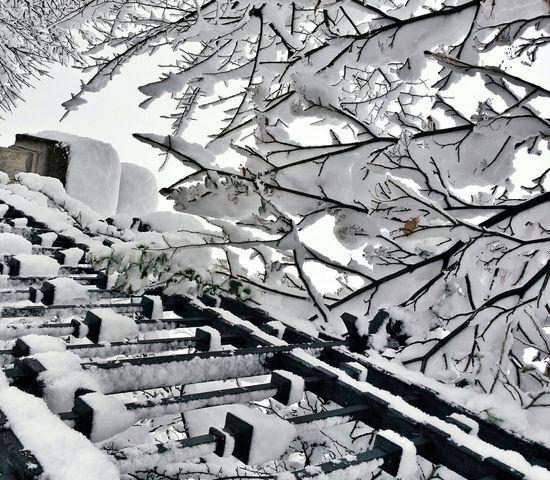Winter White By CanvasPop Snow Snowy Tree